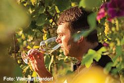 Weingut Bardorf