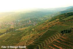 Weingut Brandl in Zöbing
