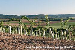 Weingut GravinO in Kürnbach (Baden)