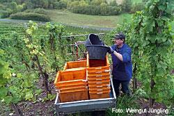 Weingut Walter Jüngling in Kenn an der Mosel