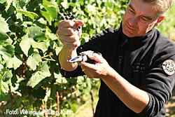 Weingut Phlipp Kuhn aus Laumersheim in der Pfalz