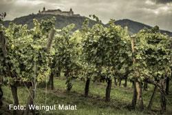 Weingut Malat