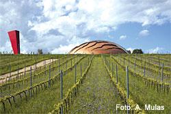 Weinanbaugebiet Montefalco