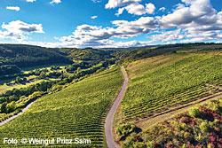 Weinbau in Rheinhessen und an der Nahe – Weingut Prinz Salm