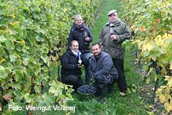 Das schwäbische Weingut Vollmer