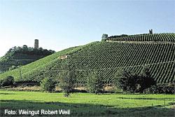 Weingut Robert Weil in Kiedrich