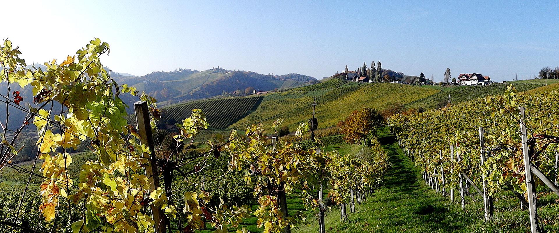 Weinbau in der Südsteiermark